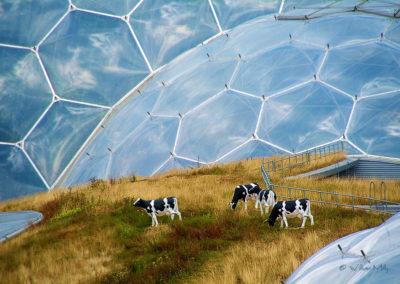 Future_Farm